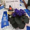 Ness' Crinkle Blue<br /> African violet
