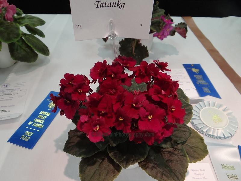 Tatanka<br /> African violet