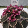Buckeye Cherry Topping<br /> African violet