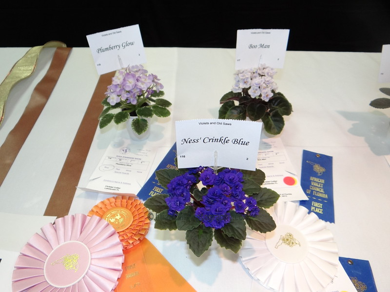 Ness' Crinkle Blue, Plumberry Glow, Boo Man<br /> African violets