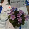 Rob's argyle socks<br /> African violet