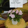 Orchard's Bumble Magnet<br /> African violet