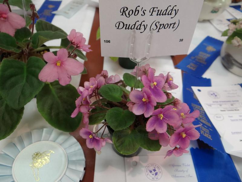 Rob's Fuddy Duddy (Sport)<br /> African violet