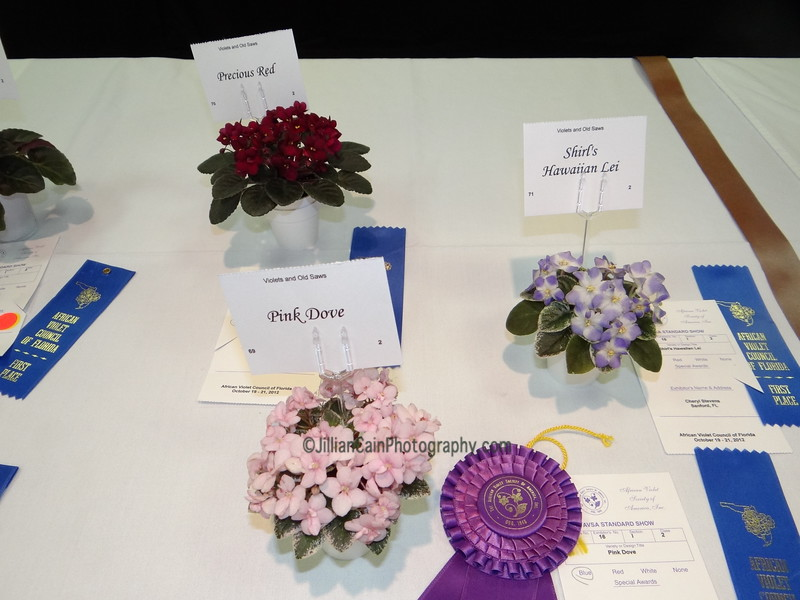 Pink Dove, Precious Red, Shirl's Hawaiian Lei<br /> African violets