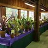 The bromeliad tables