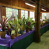 The bromeliad tables
