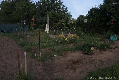 20150507 garden-12