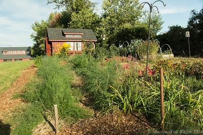 20160909 garden-10