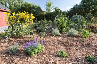 20160909 garden-1