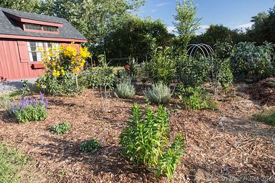 20160909 garden-2