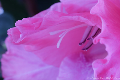 20180211 flowers-21