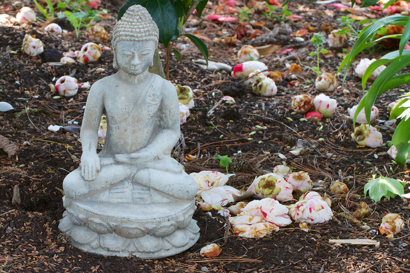Offerings from the camellias