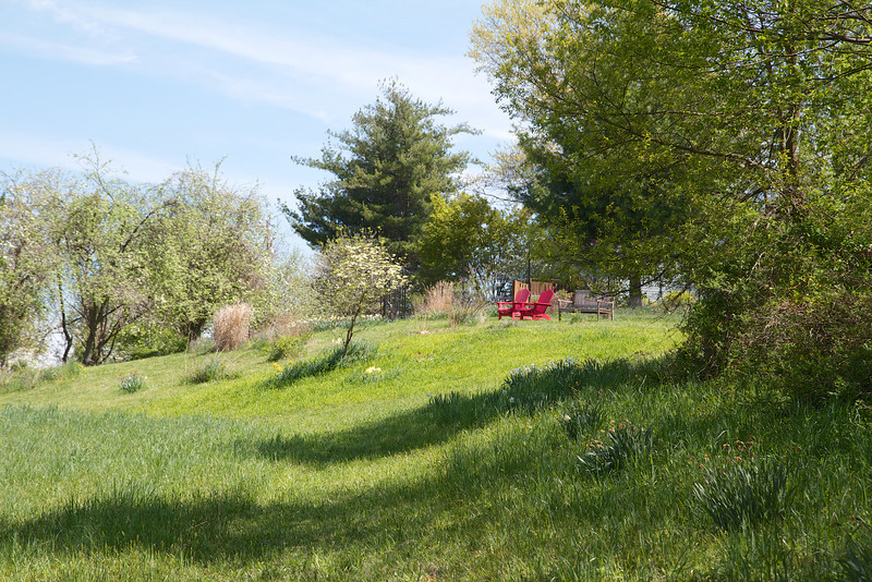 The hillside has taken on a new look with only the single dogwood standing where the trash pile once dominated.