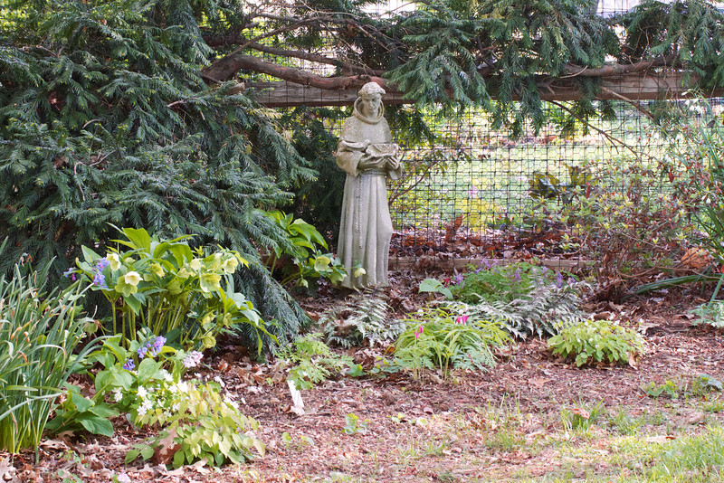 St Francis is now presiding over dry shade lovers