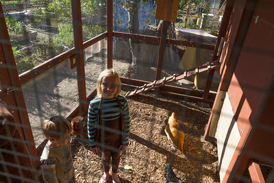 There's enough room for a parent and kids to be inside the coop to meet the chickens - popular.