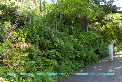 Jenny and Scott Fleming's Garden, in Berkeley, CA hills.  One side of the driveway has this incredible garden wall.