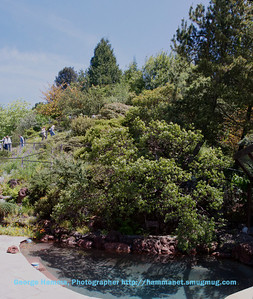 From the house back deck you can see part of the hillside garden above the swimming pool.