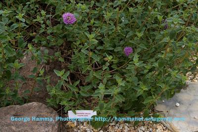Janette Backman & Mary Pellerin's garden