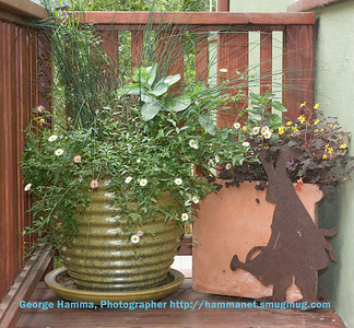 Tim & Michelle Inama's garden