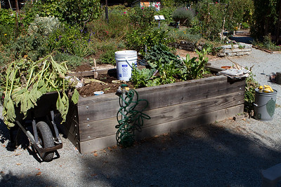 This is the elevated garden plot (set up for physically limited gardeners) to be used for the demonstration.  Garden greens and compost are ready for use.