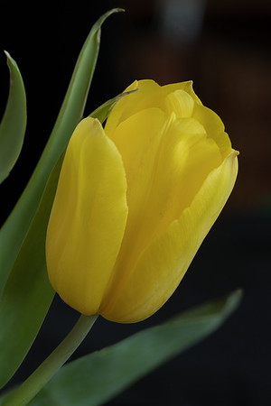 20180325 tulip FS HF 2(B,Radius8,Smoothing4)