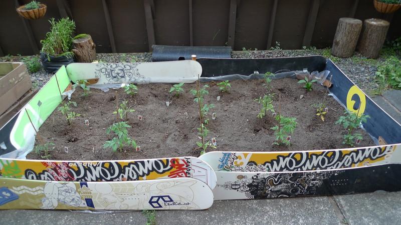 Garden 2009