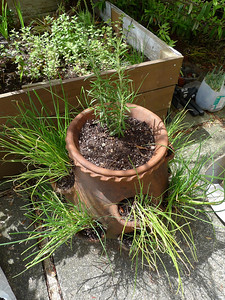 chives and rosemary