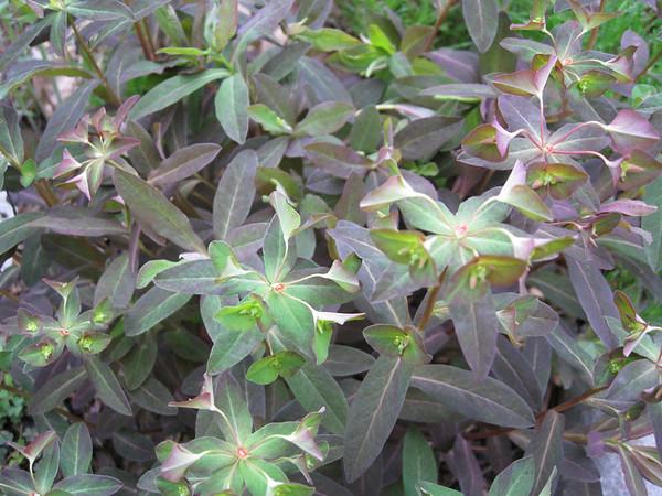 Garden update April 22 2008