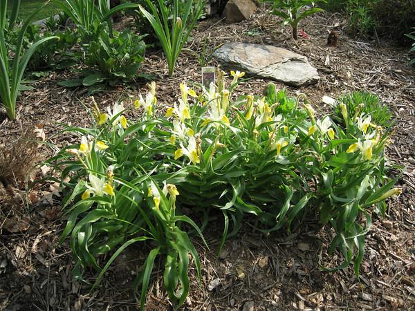 Garden update April 25 2008