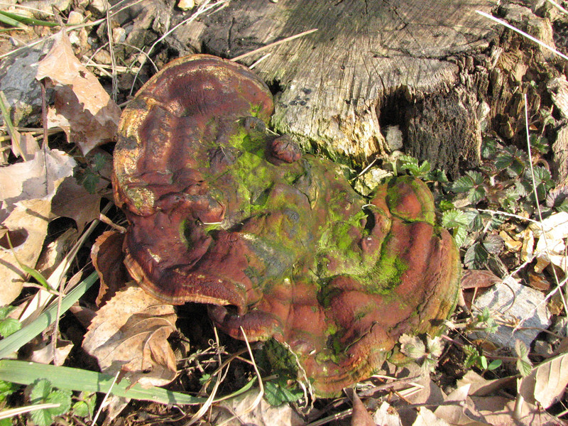 Remarkable Fungi on March 11 2008