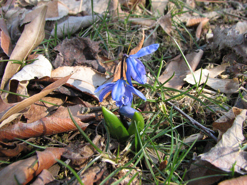 Bluebell on March 11 2008