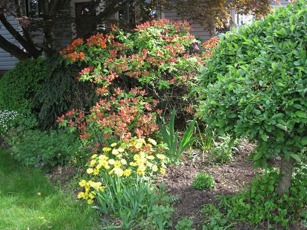Garden update May 3 2008