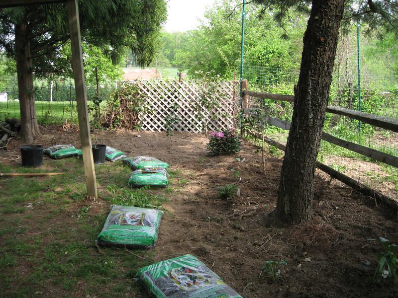 Hellebore garden takes shape