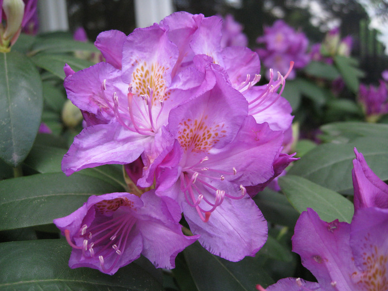Rhodie at the front