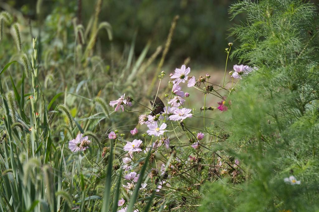 Butterflies are abundant