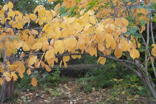 Garden update early Nov 2008