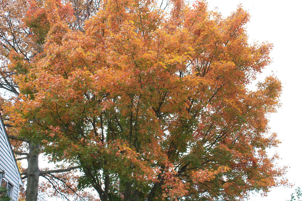 Orange red fire for the leaves