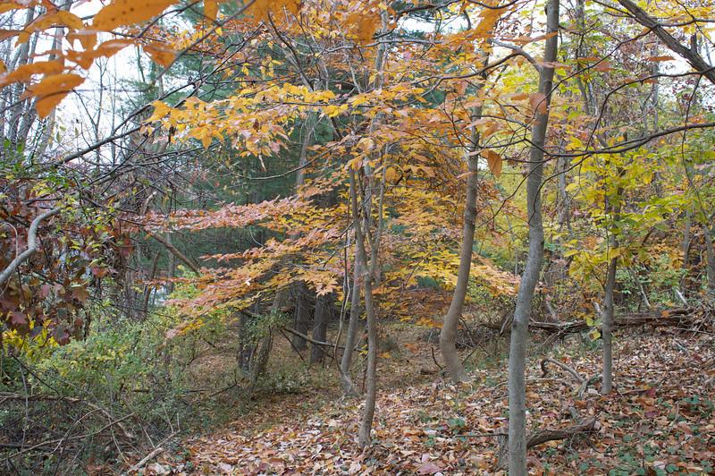 Our little Beech grove