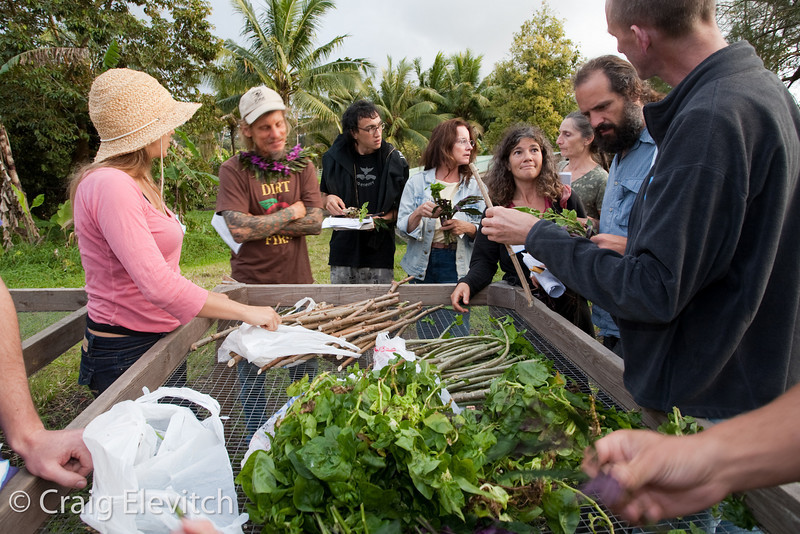 Participants were given perennial vegetable cuttings at the workshop conclusion.