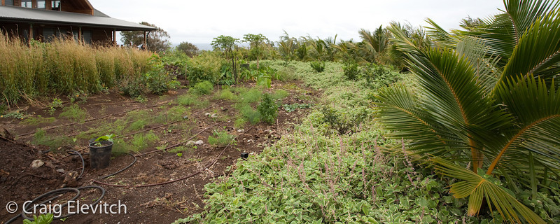 A multistory windbreak of citrus, coconut, and gliricidia was planted to protect the home garden.