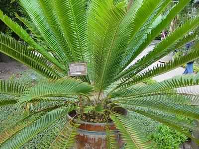 Hortus Botanicus - Amsterdam 2003