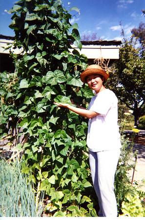 Tall beans!