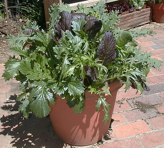 Salad in a Pot, April 2000