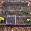1st row: Planted beets - plan to add more beets in next square when these come up (hopefully!)<br /> 2nd row: L to R: Basil, peppers,red,yellow & green<br /> 3rd row: <br /> 4th row: pole beans<br /> Wire covers are to keep birds from possibly digging up seeds...