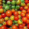 Believe it or not, our cherry tomato bushes (sweet 100) are still producing! I picked several dozen this morning (January 11, 2010). AMAZING! The green ones had fallen off but they will ripen given time indoors.