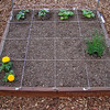 1st row:<br /> 2nd row: chives<br /> 3rd row: <br /> 4th row: cucumbers & yellow crookneck squash