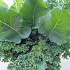 Garden Harvest 2009