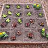 03.14.2009 Lettuce