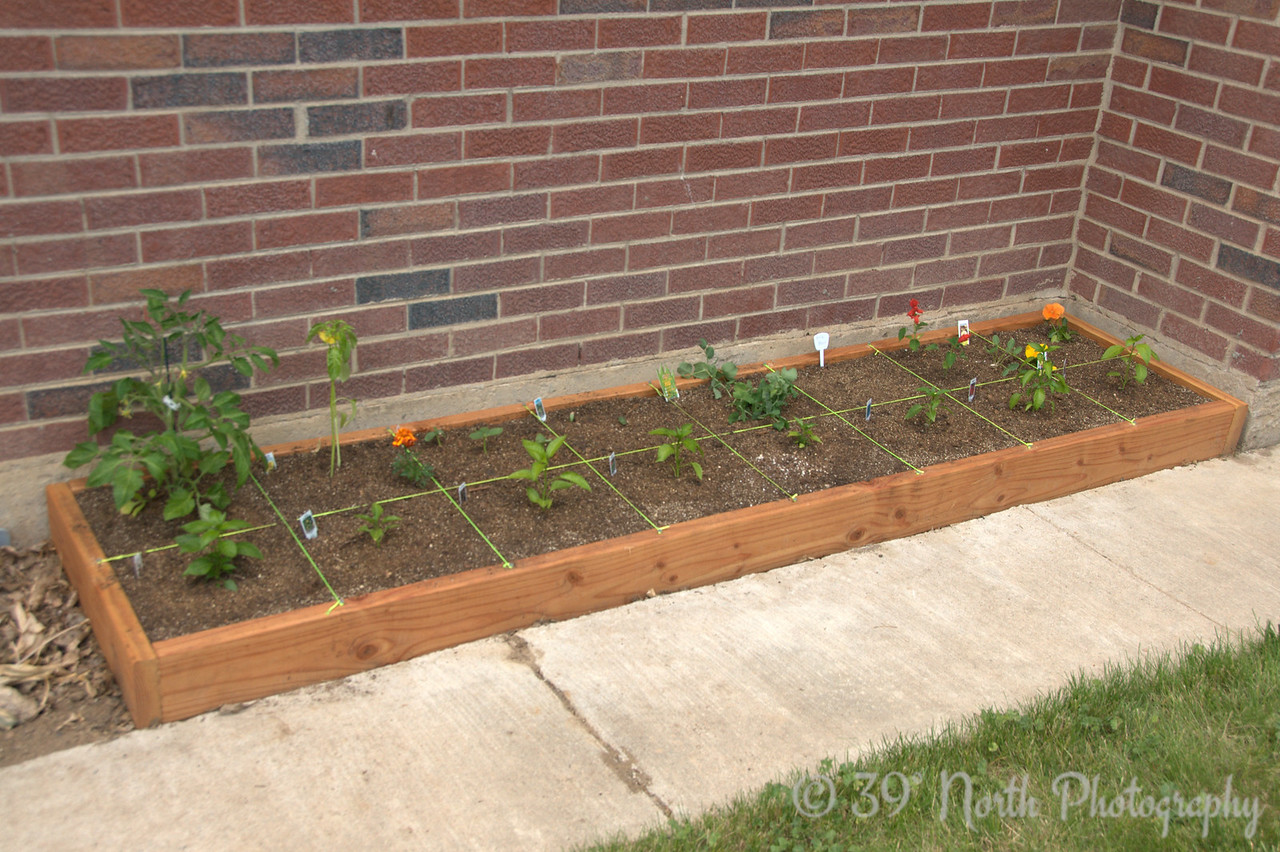 Tomato, tomatillo, cucumbers (2 kinds), sugar snap peas, pole beans, cantaloupe, 8 kinds of chilis/peppers.