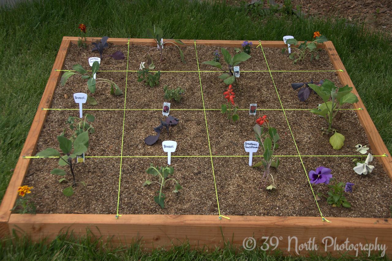Broccoli, cauliflower, eggplant, cabbage, strawberries.